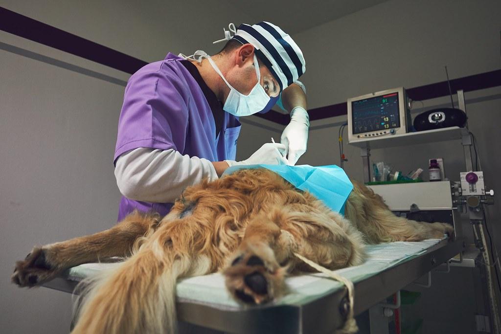 chirurgie veterinaire